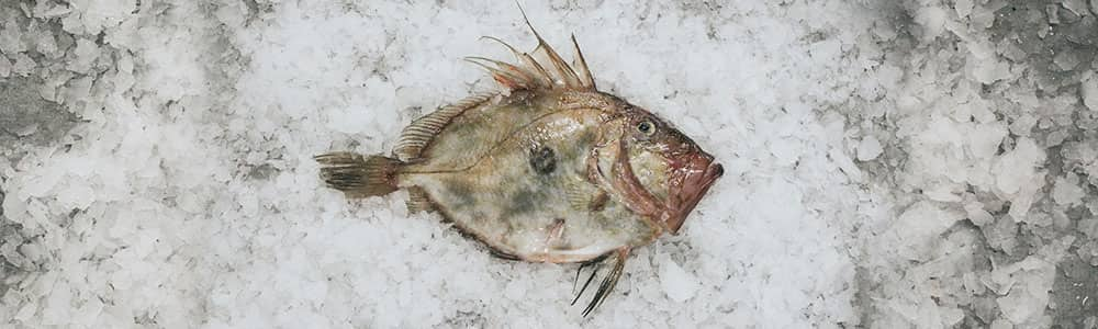 John-Dory-Freshly-Caught-Fish-Market