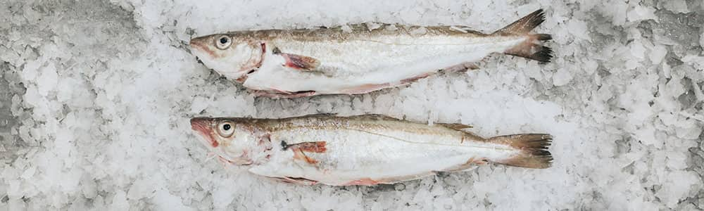 Whiting-Fish-Brixham-Fish-Market