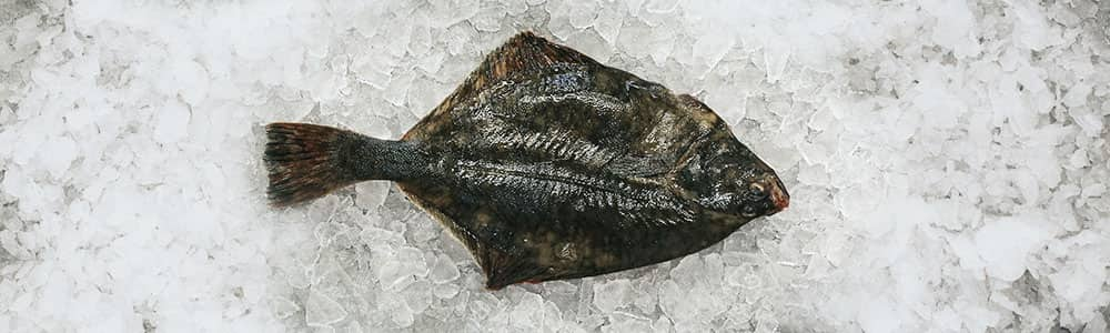 Flounder-freshly-stored-local-fish-south-west