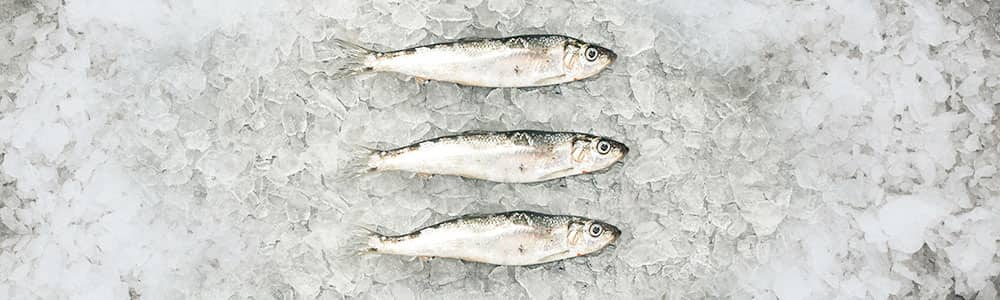 Herring-fish-images-sustainably-caught-fish