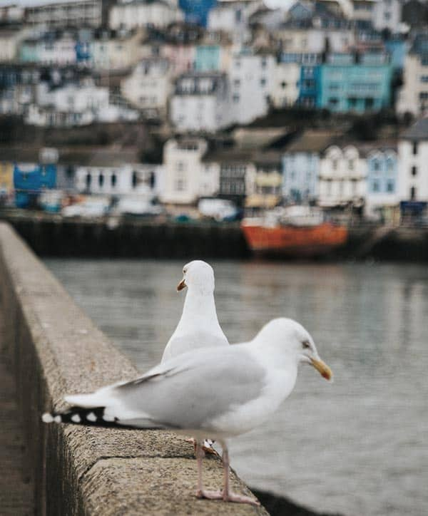 Settling-accounts-auctioneers-fish-value-brixham