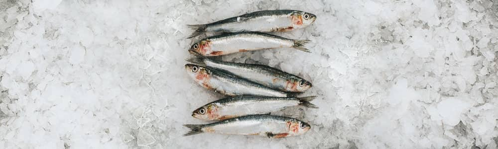 Sardines-sustainable-fishing-methods
